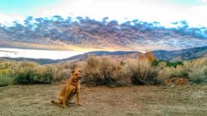 Dog in Desert Sunset