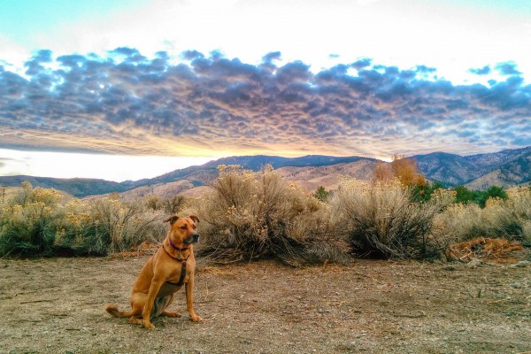 Dog in Desert Sunset