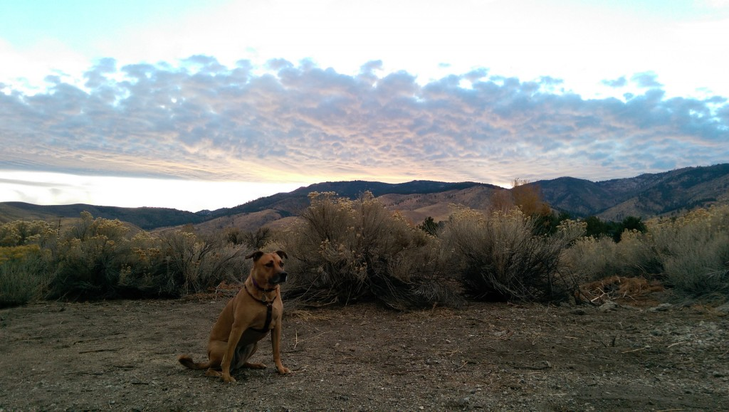 Dog at Desert Sunset, no effects