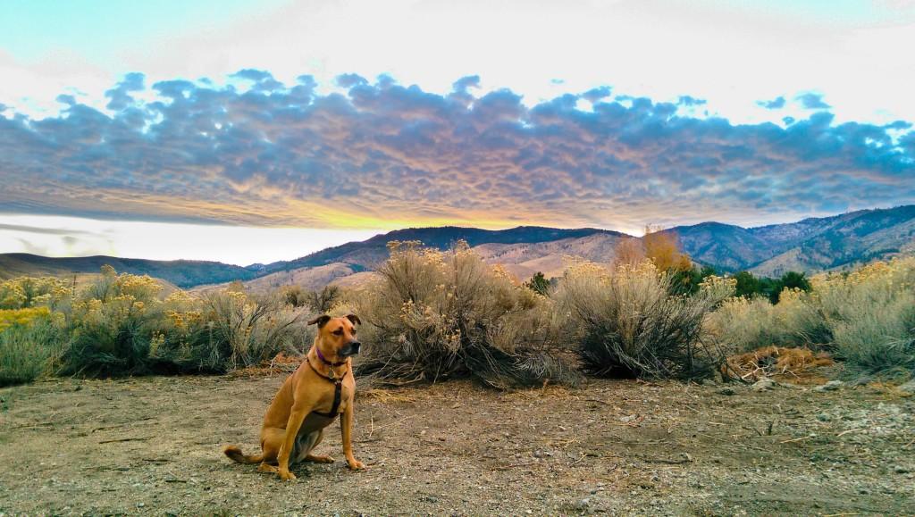 Dog at Desert Sunset, developed in Lightroom