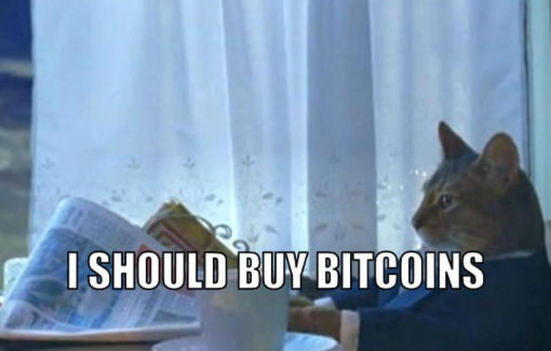 Kitteh sez buy bitcoin
