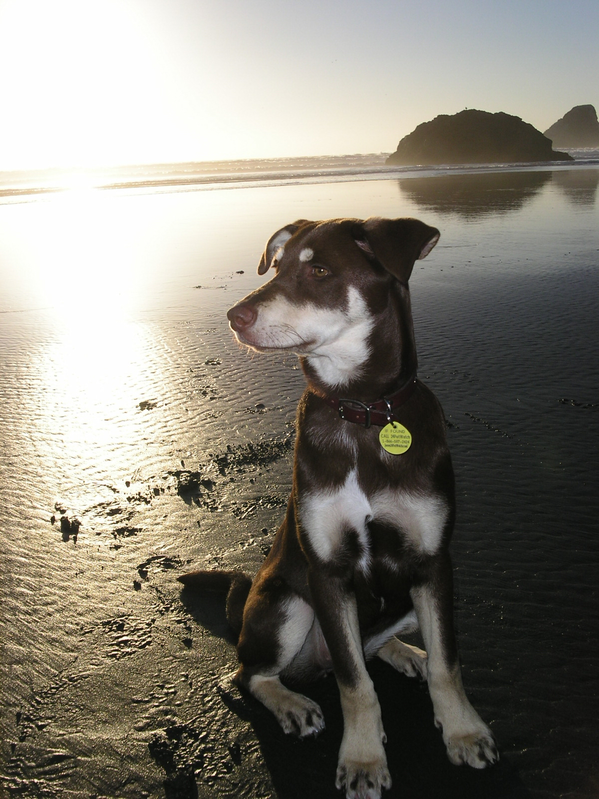 stella-at-moonstone-beach