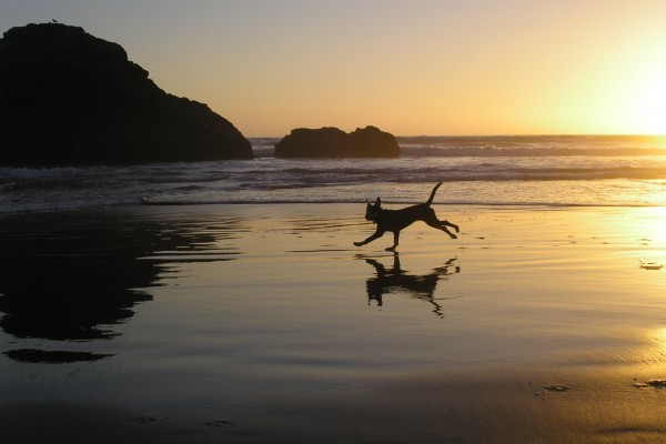 Puppy at Beach Sunset