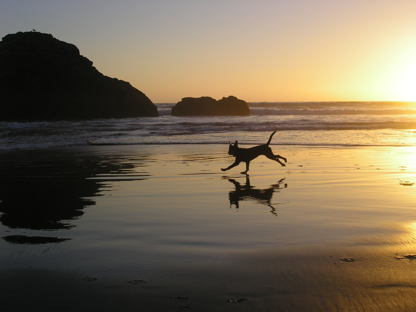 stella-running-on-the-beach-at-sunset