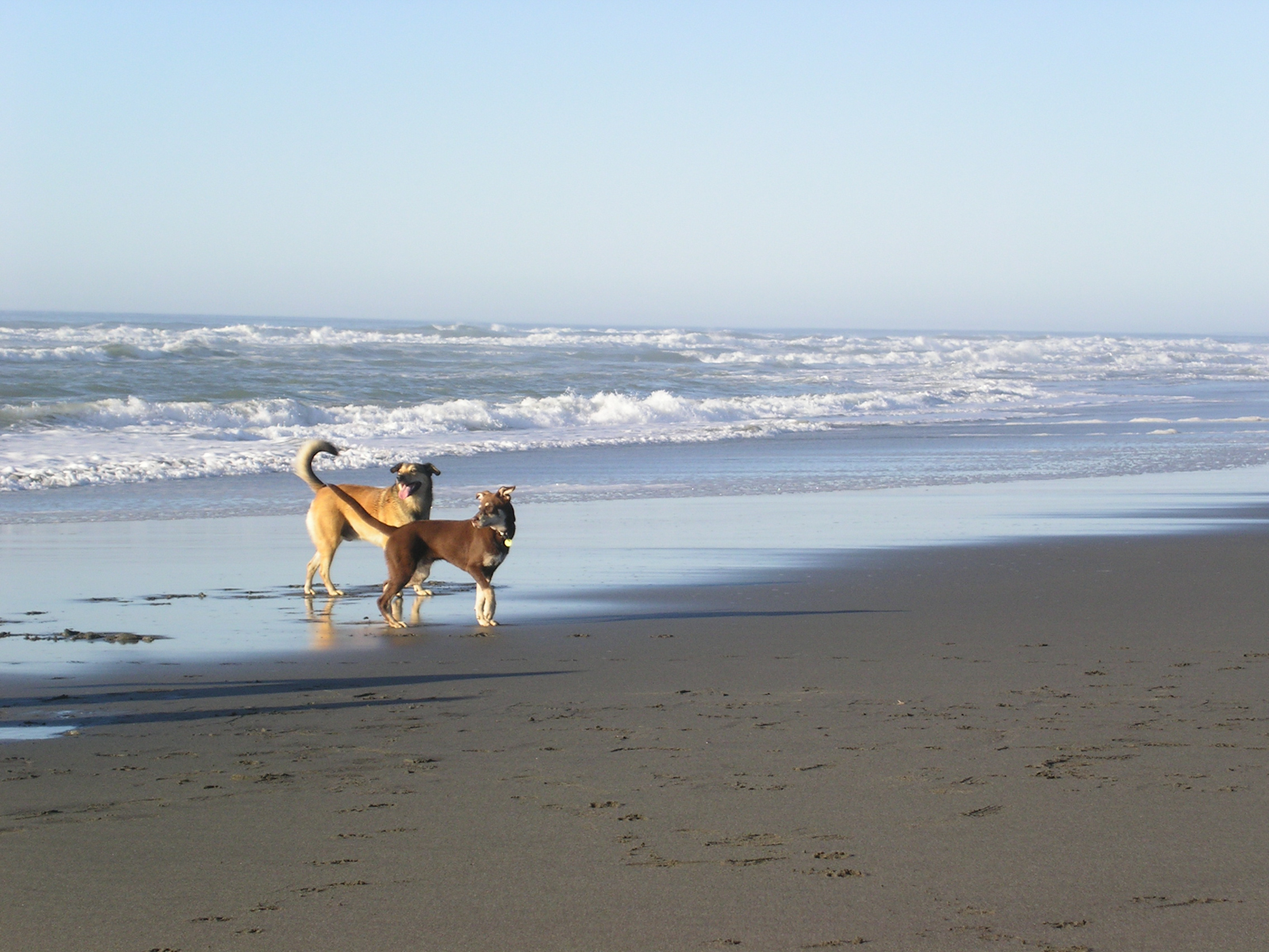 rudy-stella-running-on-the-beach
